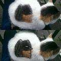 Batcat or Catbat