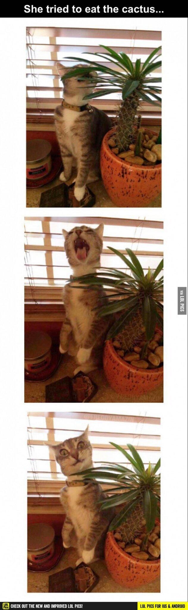 Cactus - meme