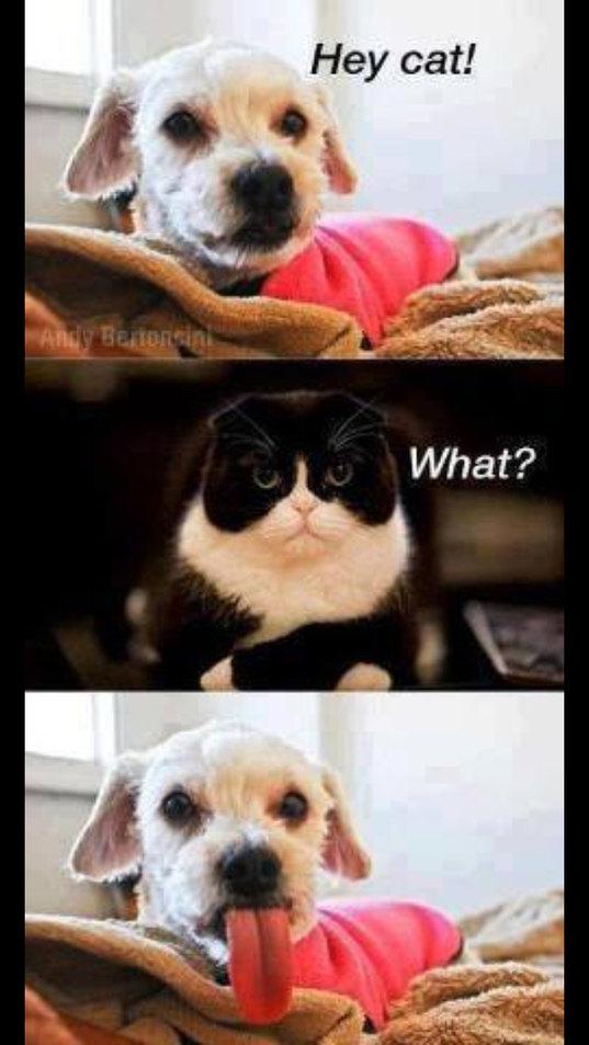 Hey cat! - meme