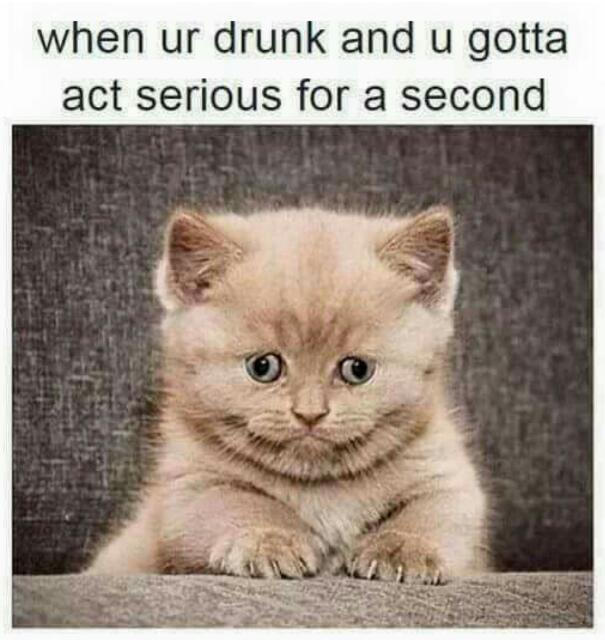 55f940249b380 give me more beer meme by phantomaniac ) memedroid