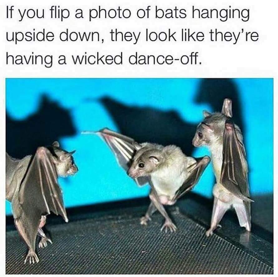 Their dancing looks pretty batass. Hahahaha - meme