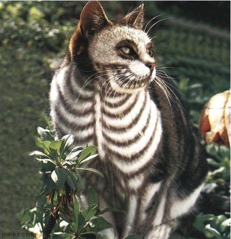 L'année dernière c'était mon chien' cette année c'est mon chat qui est prêt pour Halloween ( aller voir mais meme )