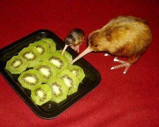 Why Kiwi why? - meme