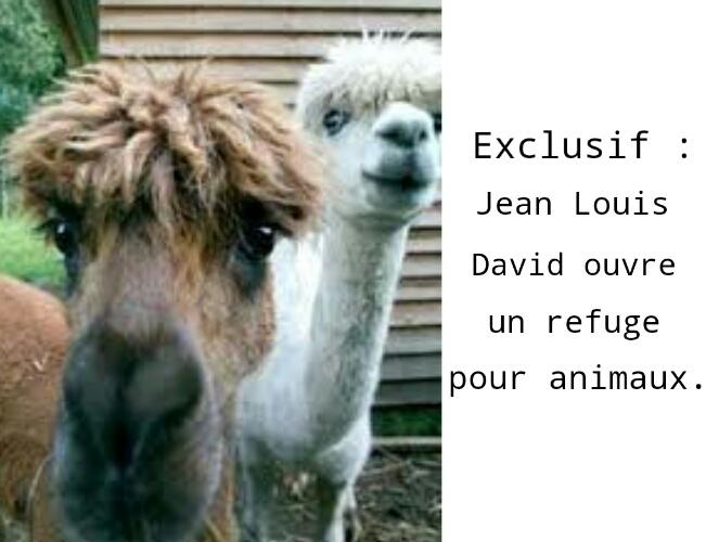 Lamas lookés  ! - meme