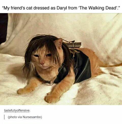 Je veux ce chat - meme