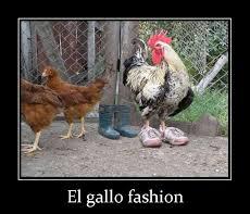 Fashion - meme