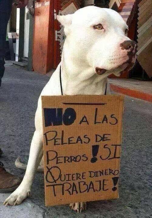 No al maltrato animal - meme