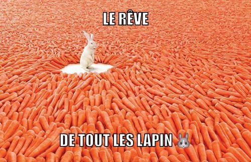 Lapin - meme