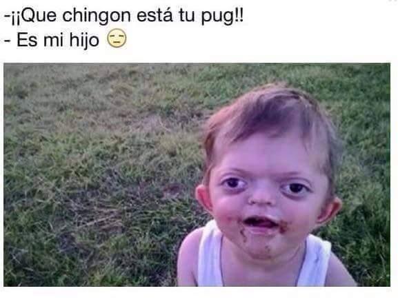 Pug - meme