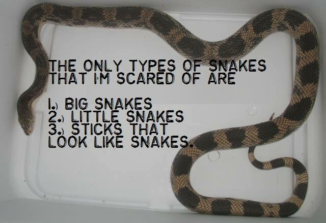 I'm not actually not afraid of snakes - meme