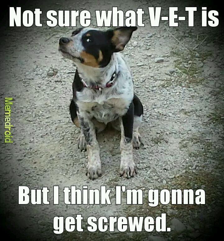 Silly dog - meme