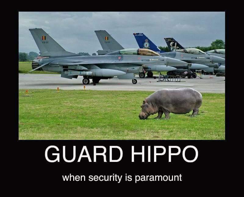 Hippo - meme