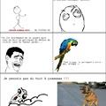 Un perroquet c'est méchant...