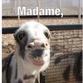 madame?