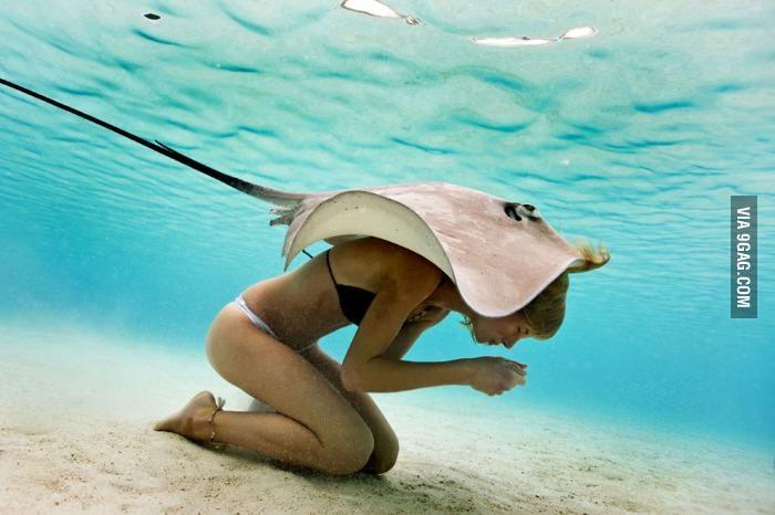 Un câlin sous l'eau - meme