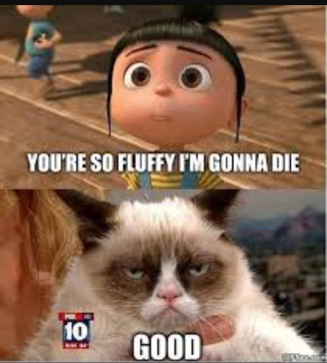 so fluffy! - meme