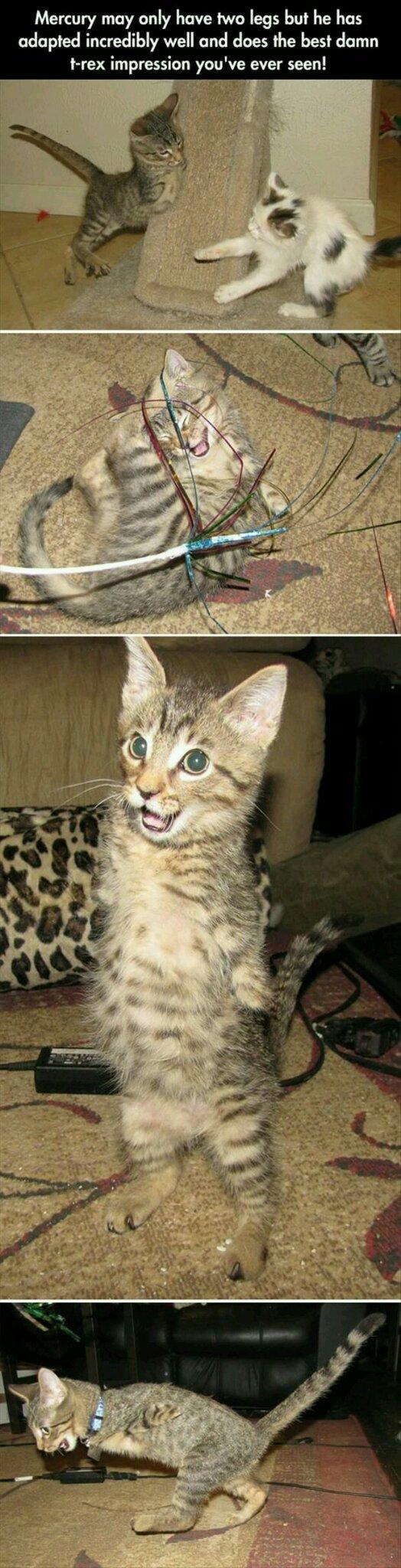 Here's a daily dose of cute cat - meme