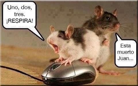 Pobre raton - meme