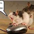 Pobre raton
