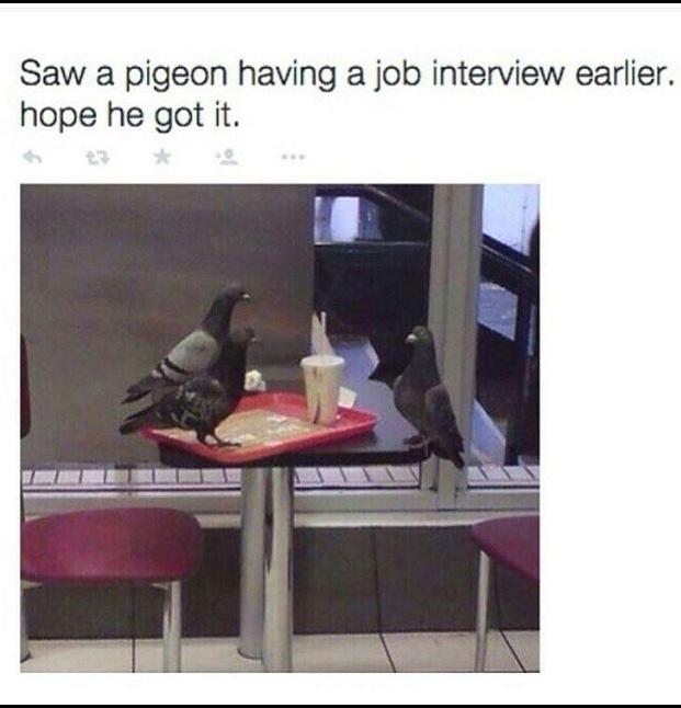 new job - meme