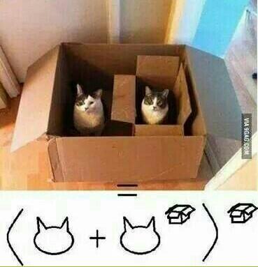 gatos *w* - meme