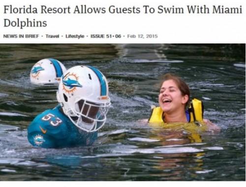Dolphin - meme