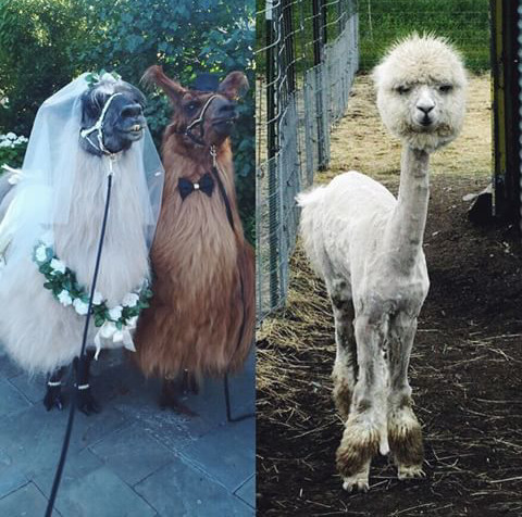 Avant le mariage / Après le mariage - meme