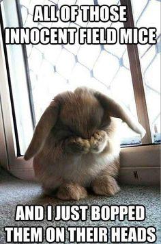 Bunny mass - meme
