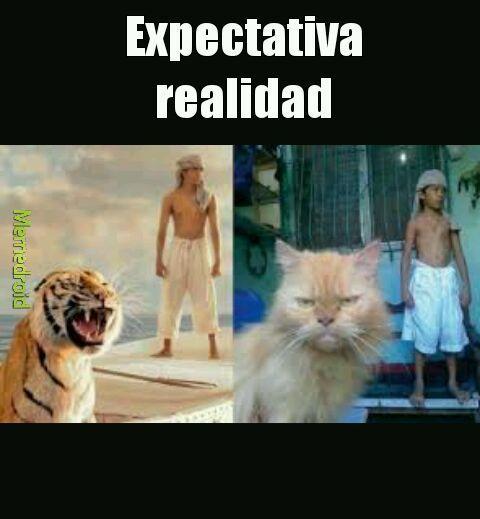 Expectativa realidad - meme