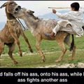 title is donkey