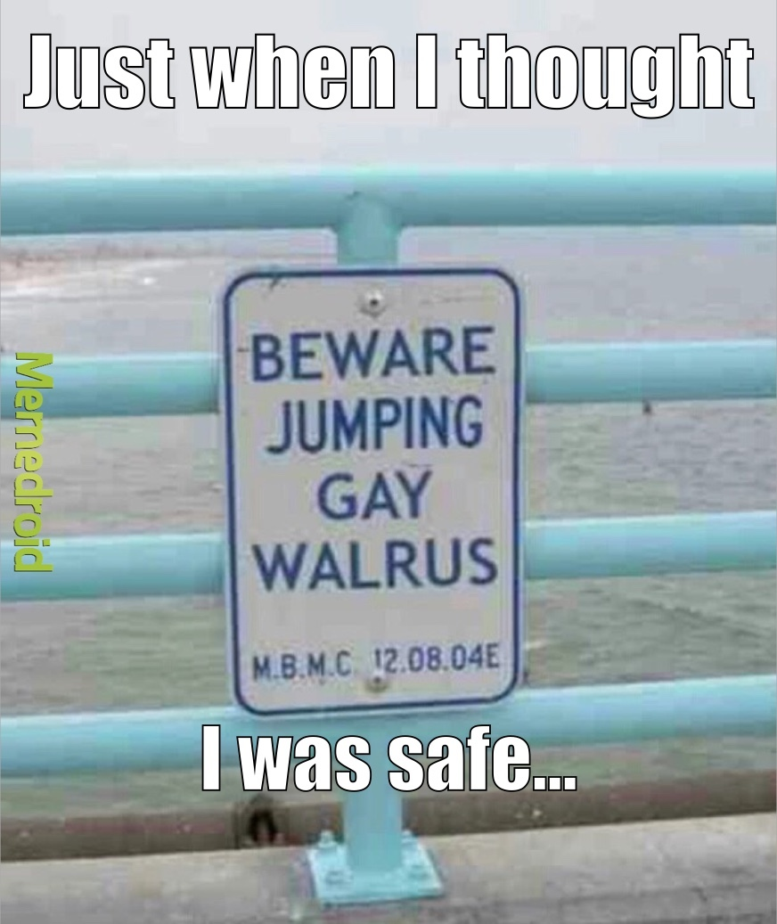 Gay walruses - meme