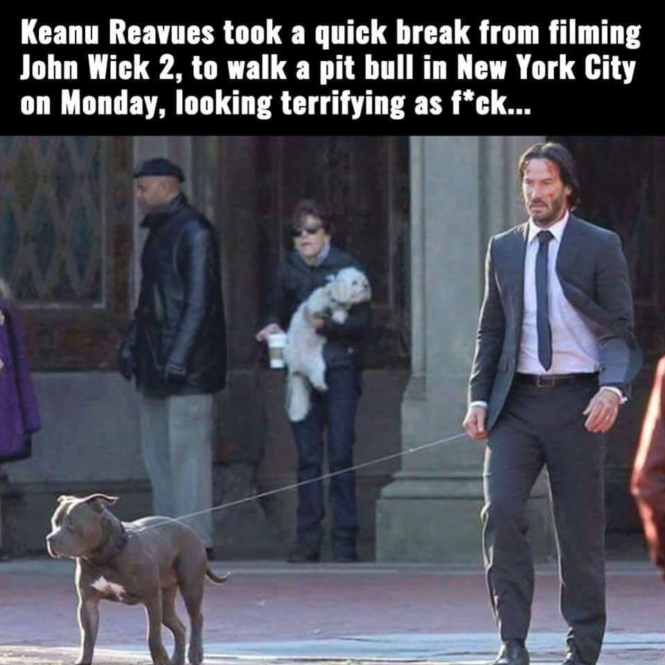 5655089e7704a the best dog walking memes ) memedroid