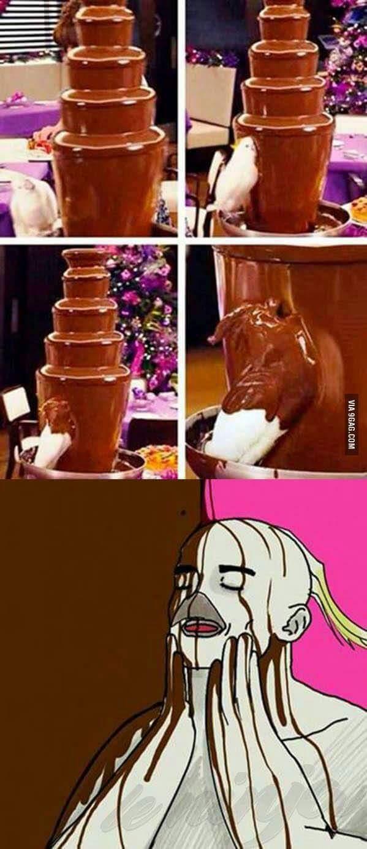 Cacatoès au cacao. - meme