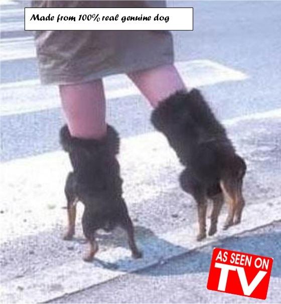 Pet turned shoes - meme