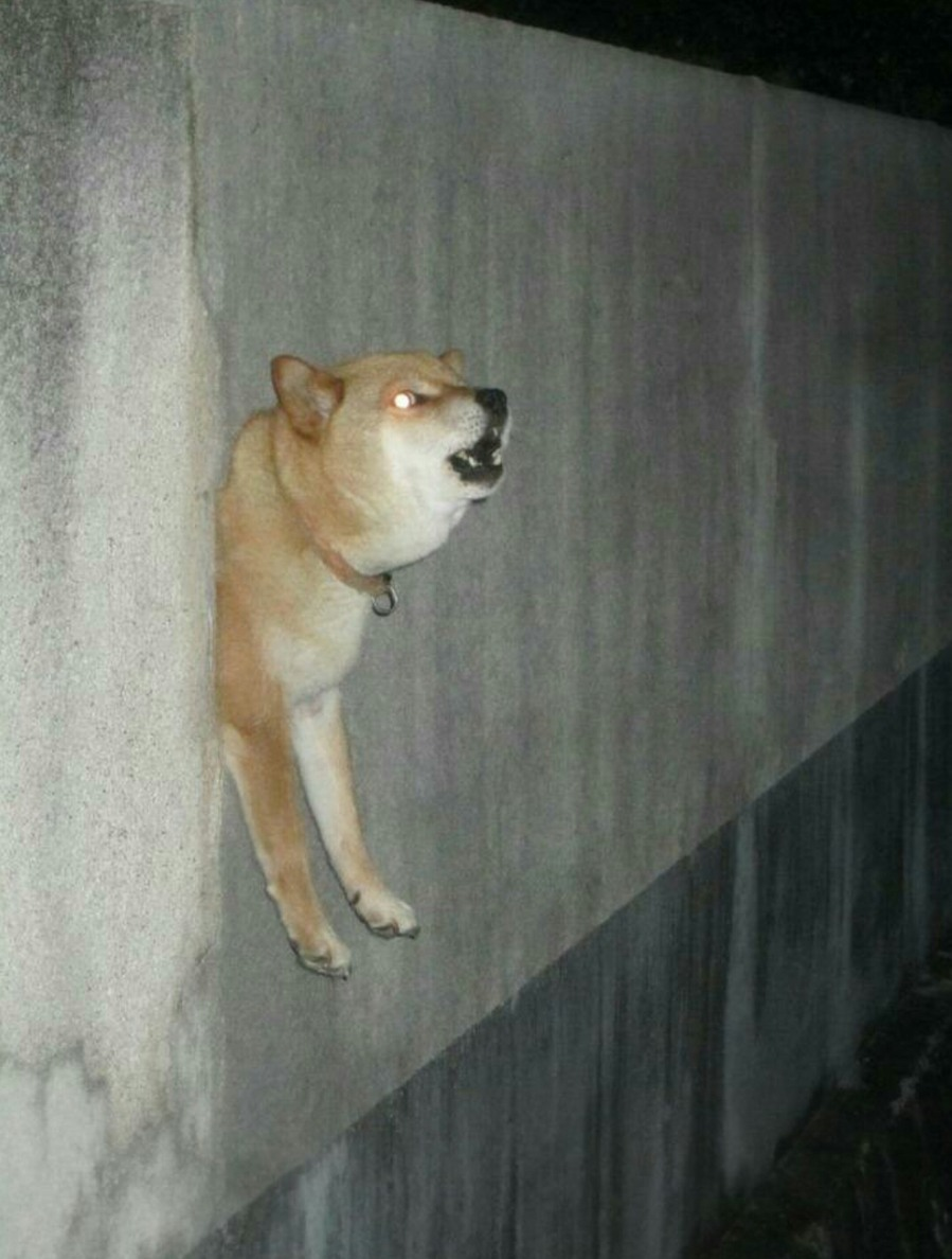 Walldoge - meme