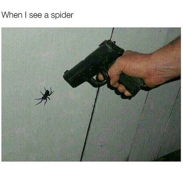 spiders - meme