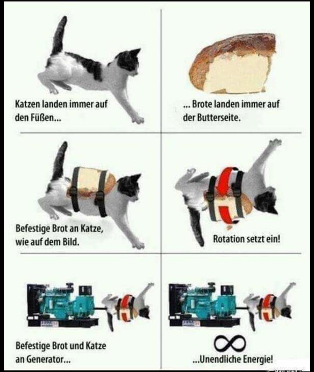 Katzen sind die Zukunft - meme