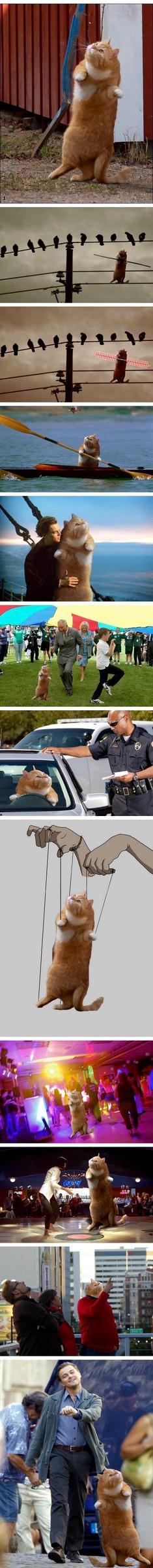 Dancing cat ! - meme