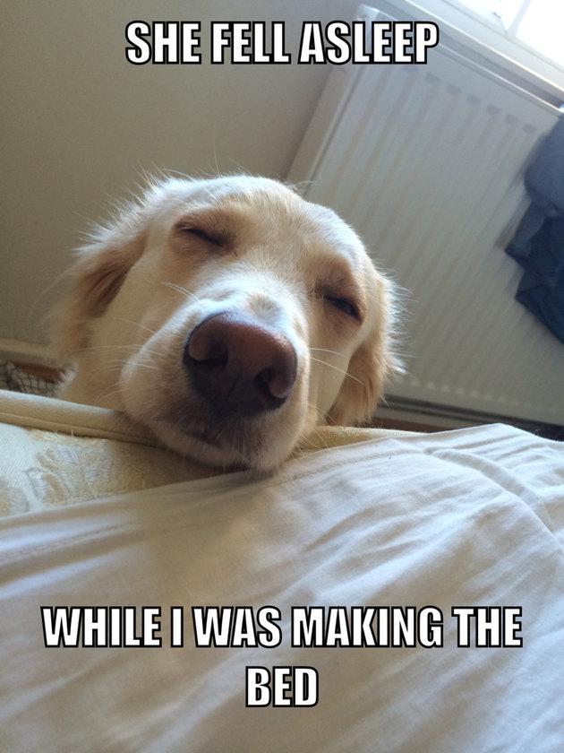 Sleepy doggy - meme