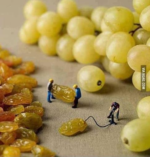 Comment sont fait les raisins... - meme