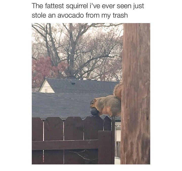 Fat squirrel - meme