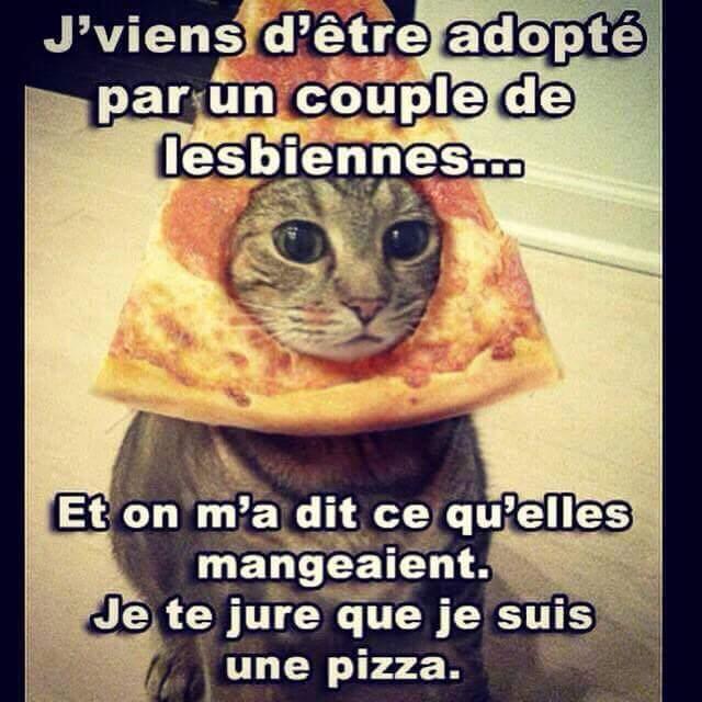 Pauvre chat ... - meme