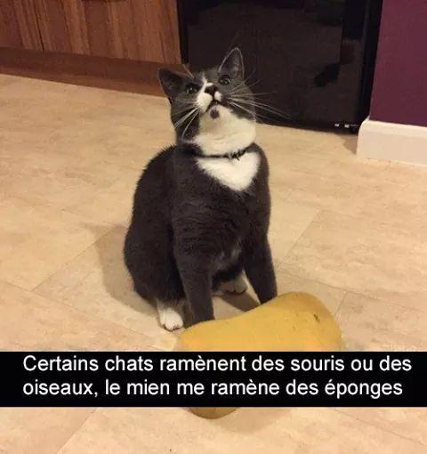 Mon chat - meme
