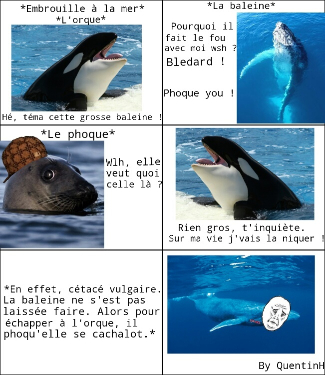 Clash de mer-de #2 - meme