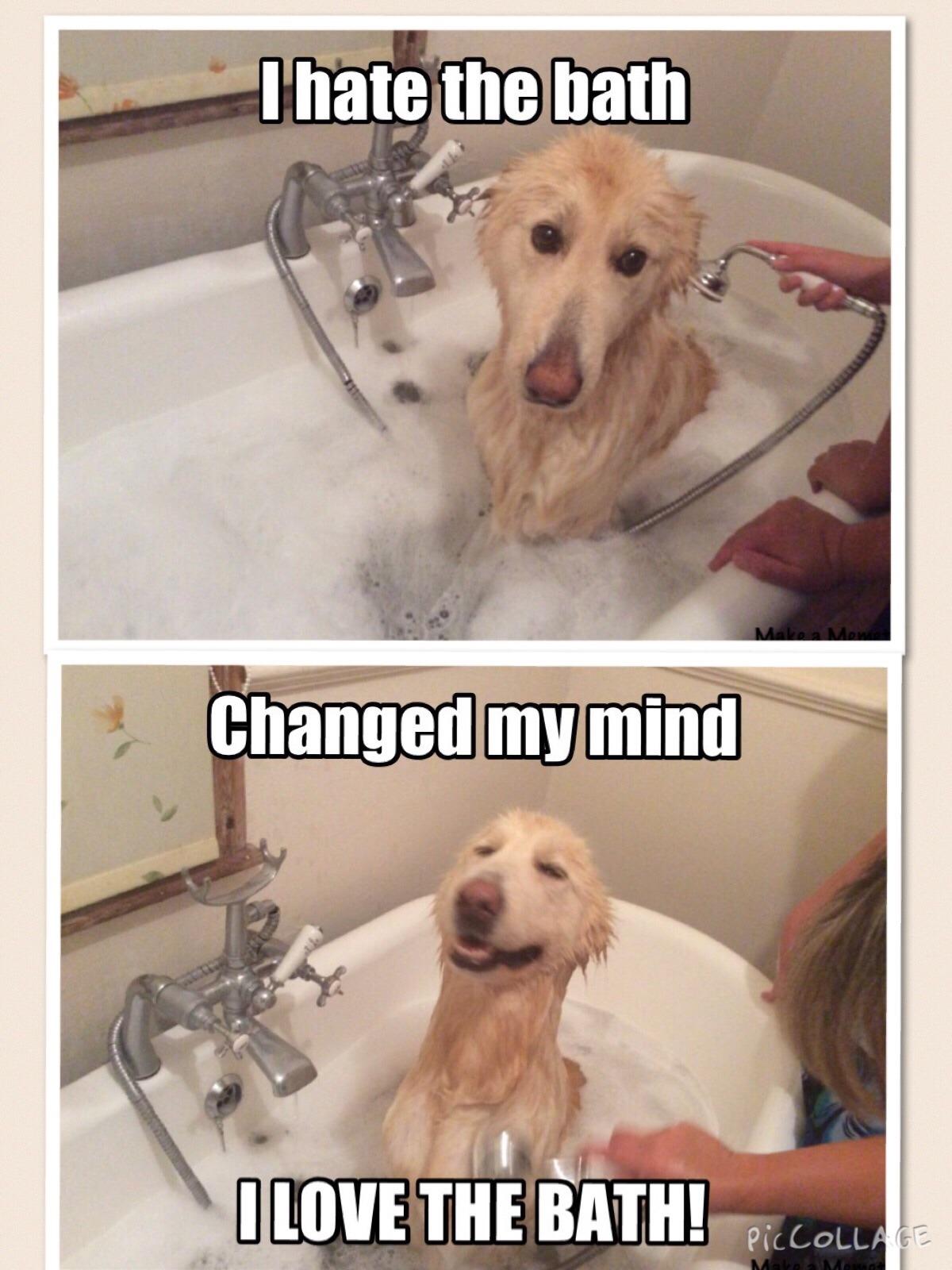 White German Shepherd in the bath - meme
