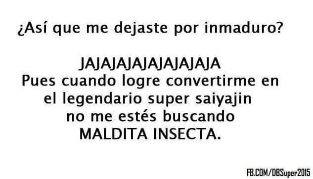 Insectos - meme