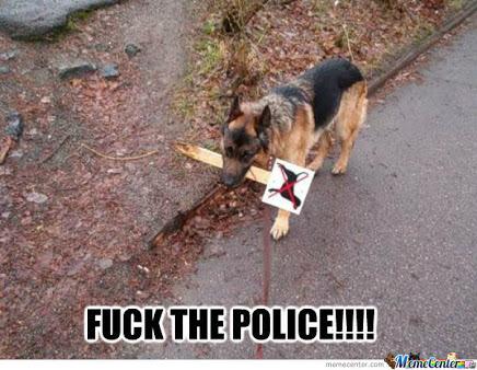 Bad dog - meme