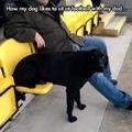 how my dog
