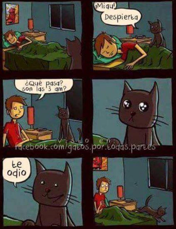 gatos everywhere - meme