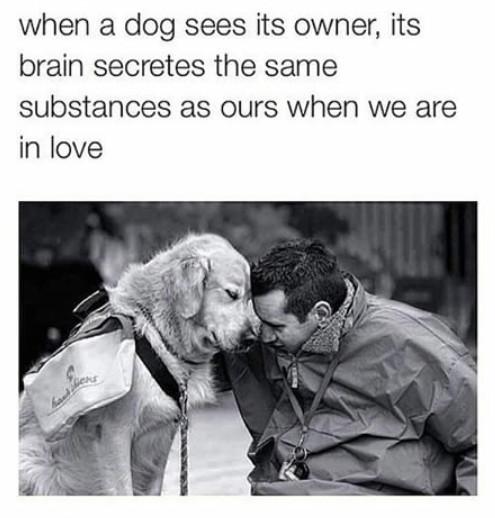 Man's best friend... - meme